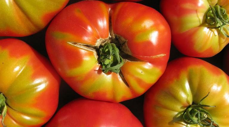 The-Tomato