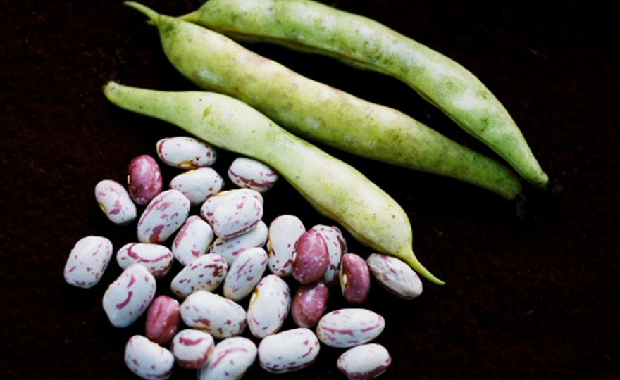recipe: speckled cranberry pole bean [17]