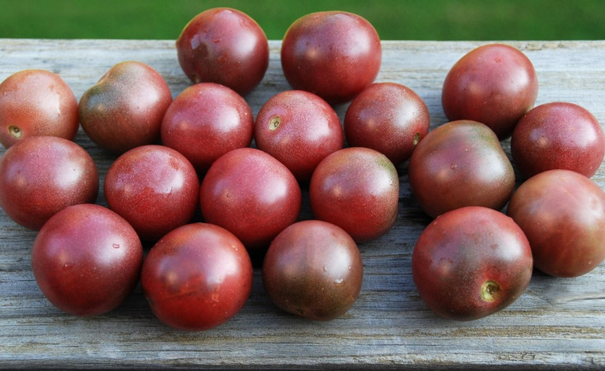 hh tomato black cherry harvesting history. Black Bedroom Furniture Sets. Home Design Ideas