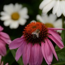 HH_Wildflowers_Pollinators Paradise