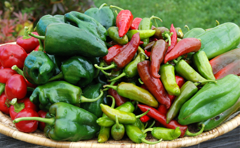 Harvesting History Container Hot Peppers