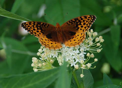 Pollinator Plants Harvesting History