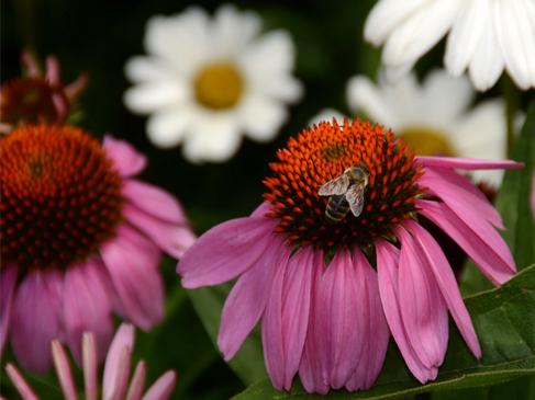 Harvesting History Super Pollinators