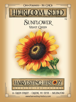 Shop Sunflower Red Sun Velvet Queen And Other Seeds At Harvesting